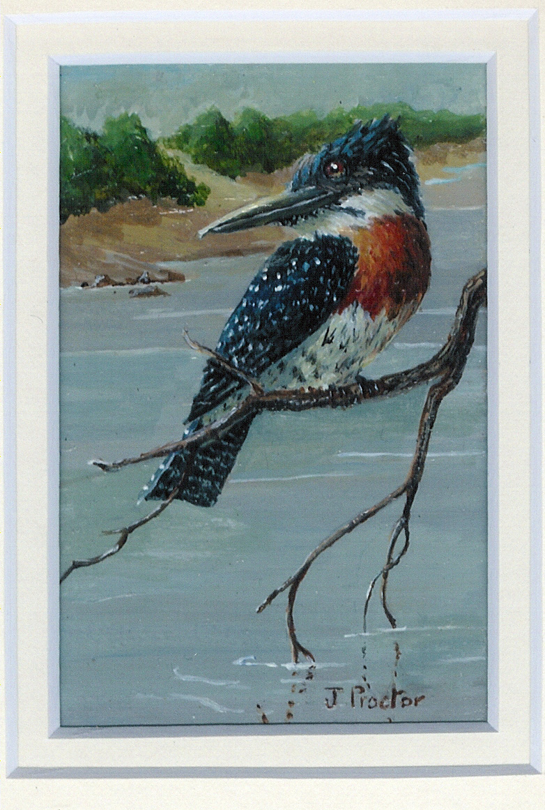 108 Giant Kingfisher by Judy Proctor - Acrylic