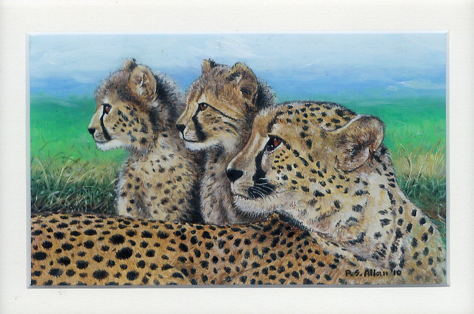 50 Mother Cheetah & Cubs by Paul Allen - Oil on refined canvas