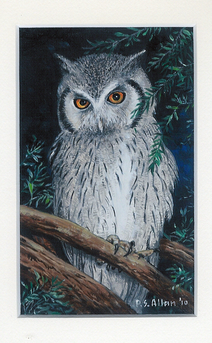 52 A Scops Owl by Paul Allen - Oil on refined canvas