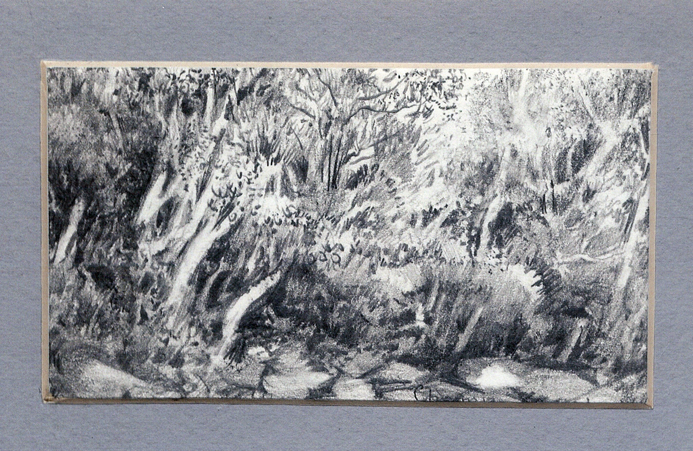 78 Kruger Park Bush by Charmian Kennealy - Graphite