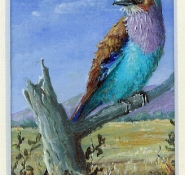 109 Lilac Breasted Roller by Judy Proctor - Acrylic