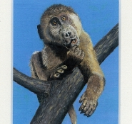 44 Say What? Young Chacma Baboon by Rob Stewart - Oil on Fine Canvas