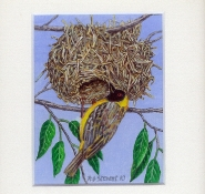 47 Lesser Masked Weaver by Rob Stewart - Oil on Fine Canvas