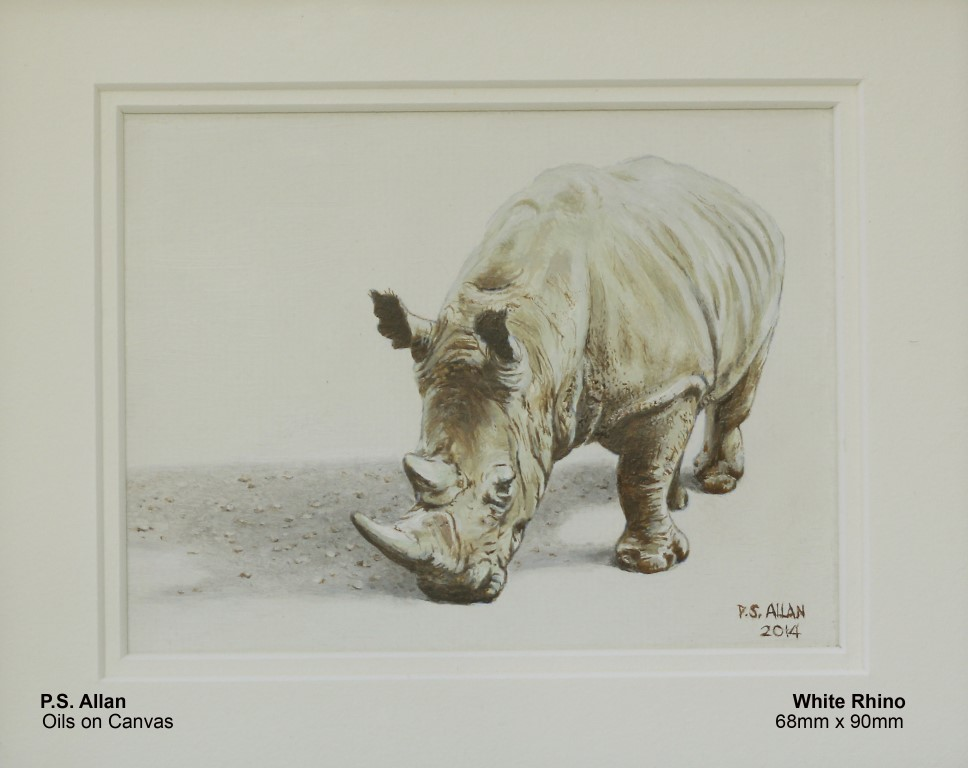 allan-paul-white-rhino