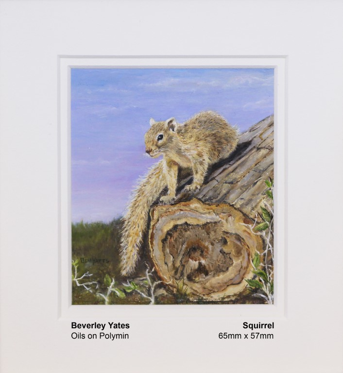 yates-beverley-squirrel