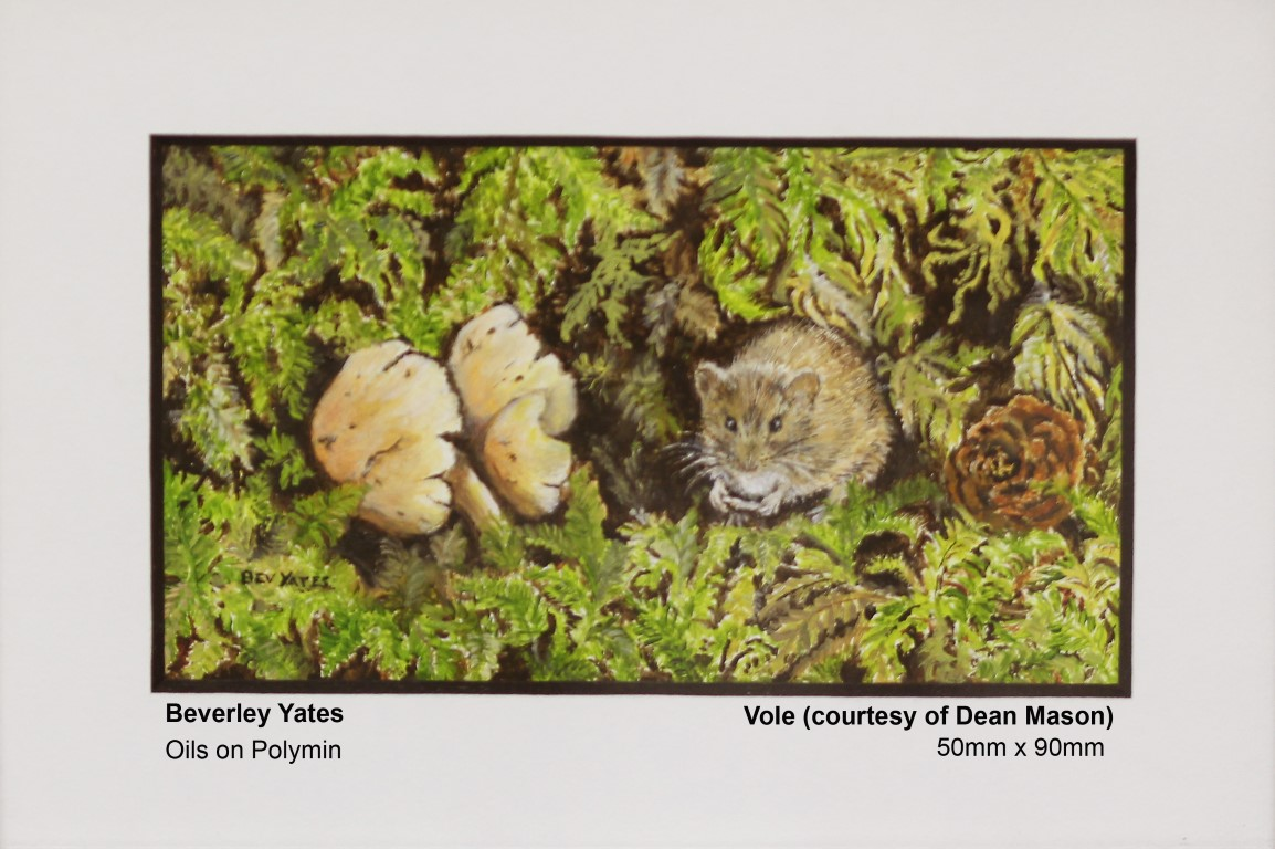 yates-beverley-vole-courtesy-of-dean-mason