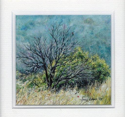 27 Burnt Tree in the Pilansburg by Carrol Evans in Watercolour and Ink