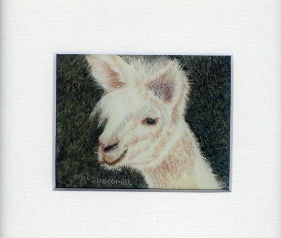 52 Lama by Meg Edgecomby in Watercolour on Polymin