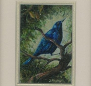 68 Glossy Starling by Judy Proctor in Acrylic