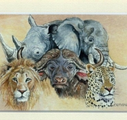 71 The Big Five by Leonora de Lange in Watercolour