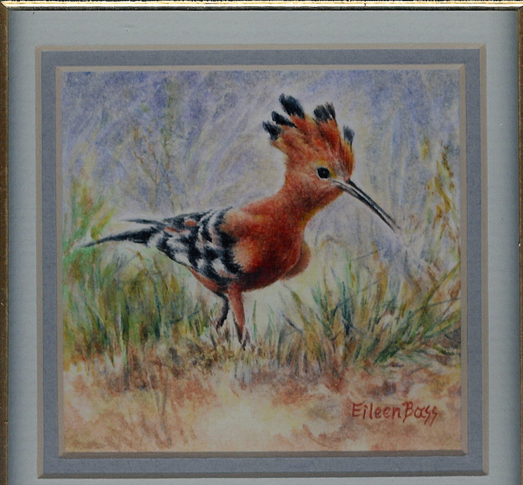 15 African Hoopoe by Eileen Bass - Watercolour