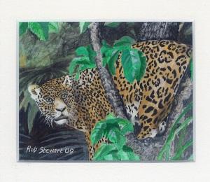 45 Magnificent Cat - Jaguar by Rob Stewart - Oil on Fine Canvas