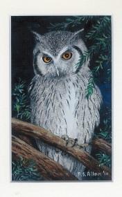 52 A Scops Owl by Paul Allen - Oil on refined canvas