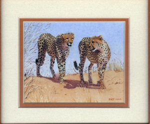 84 Cheetah - Kalagadi by Pat Puttergill - Watercolour