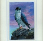 106 Peregrine Falcon by Judy Proctor - Acrylic
