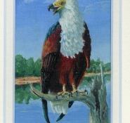 107 Fish Eagle by Judy Proctor - Acrylic