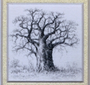 11 Baobab by Eileen Bass - Pencil