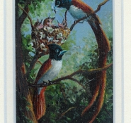 111 Paradise Flycatchers by Judy Proctor - Acrylic