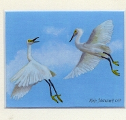 46 Is this the Way to Amarillo? Snowy Egrets by Rob Stewart - Oil on Fine Canvas
