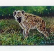 51 Baby Hyena by Paul Allen - Oil on refined canvas