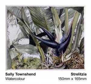 sally-townshend-1