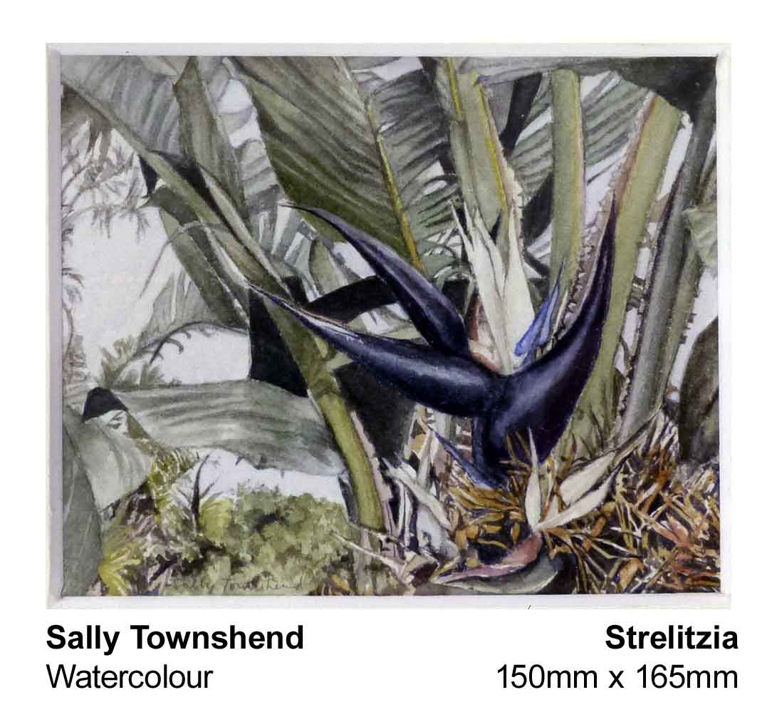 sally-townshend-1