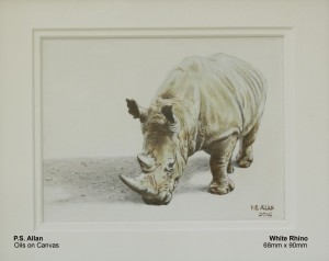allan-paul-white-rhino