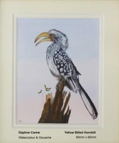 carew-daphne-yellow-billed-hornbill