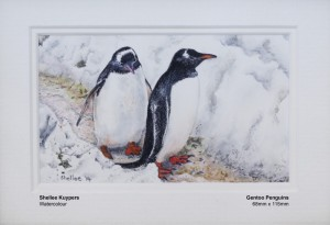 kuypers-shellee-gentoo-penguins