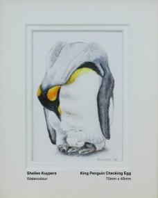 kuypers-shellee-king-penguin-checking-egg