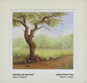 van-der-poel-carolina-camel-thorn-tree