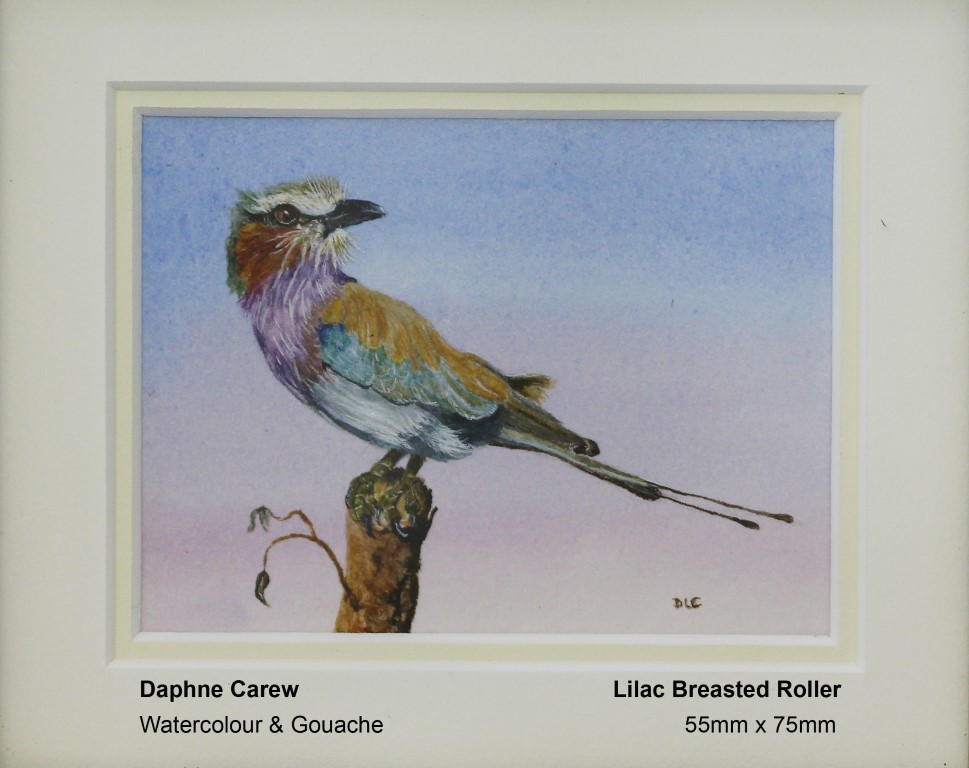 carew-daphne-lilac-breasted-roller
