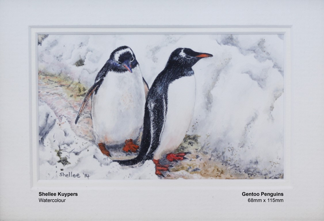 kuypers-shellee-gentoo-penguins