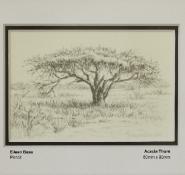 bass-eileen-acacia-thorn