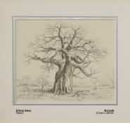 bass-eileen-baobab