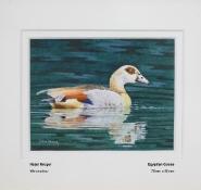 kruger-hazel-egyptian-goose