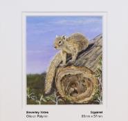 yates-beverley-squirrel