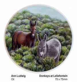 Donkey's at Leliesfontein