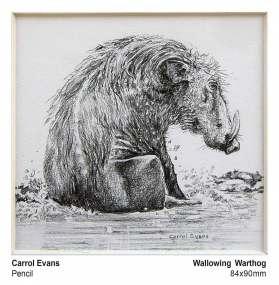 Wallowing Warthog