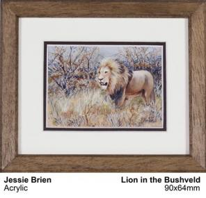 Lion in the Bushveld