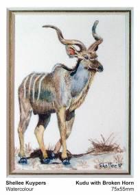 Kudu with broken horn