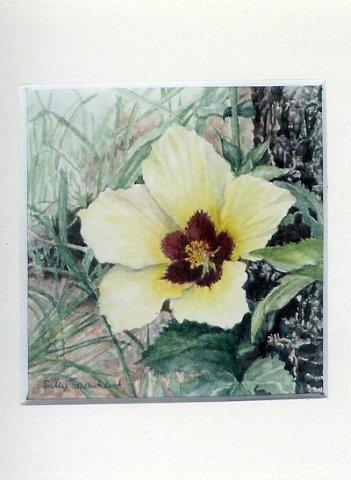 20 Wild Hibiscus by Sally Townshend in Watercolour