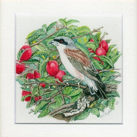 35 Red Backed Shrike by Mary Lynn Kydd Mixed Media
