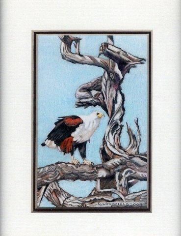 45 Fish Eagle by Debra Longfield Coloured Pencil