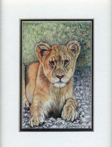 48 Young Lioness by Debra Longfield in Coloured Pencil