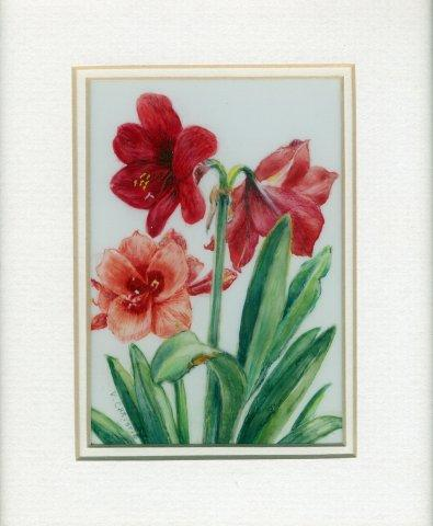 6 Amaryllis by Valerie Christie in Watercolour on Polymin