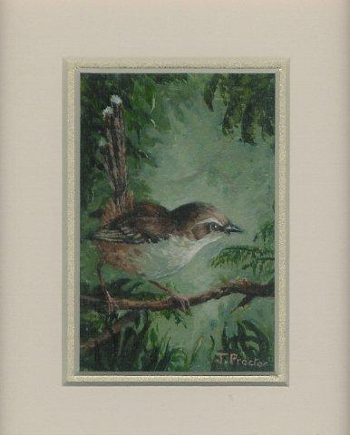 66 Tawny-Flanked Prinia by Judy Proctor in Acrylic