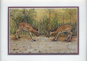 47 Fighting Impala by Debra Longfield in Coloured Pencil