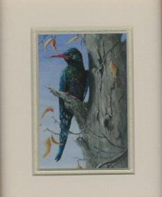 67 Red Billed Wood Hoopoe by Judy Proctor in Acrylic