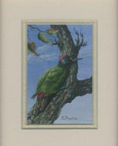 69 Olive Woodpecker by Judy Proctor in Acrylic
